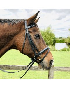 Show Bridle Padded Flash - Aura Range