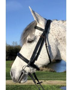 Show Bridle Padded Cavesson - Aura Range